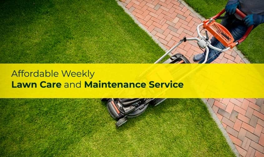 The Sodfather | Lawn Repair Winnipeg | Lawn Care and Maintenance Experts